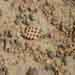 7.Perforated Pottery at Mound of  Ganweri wala, Cholistan,21
